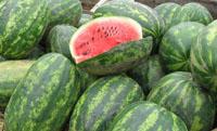 lubenice-blog